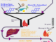 Schematische Darstellung der Vitamin D Synthese im menschlichen Körper