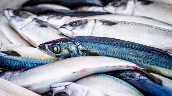 in fettreichen Kaltwasserfischen findet sich viel Vitamin D