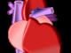 Abbildung des Herzens mit seinen Vorhöfen, Kammern und Gefäßen