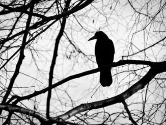 Krähe als Symbol für Winterblues