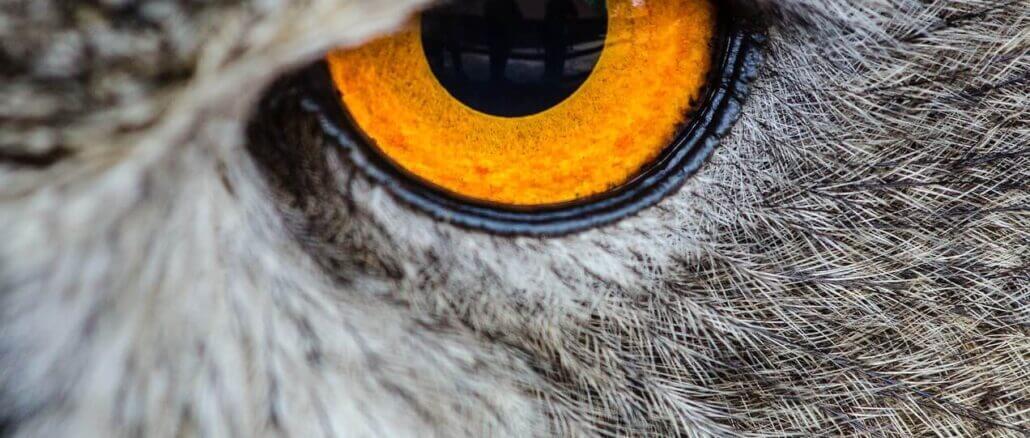 Hauttumor am Augenlid